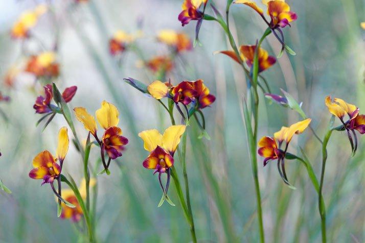 Orquídeas, amor y mentiras