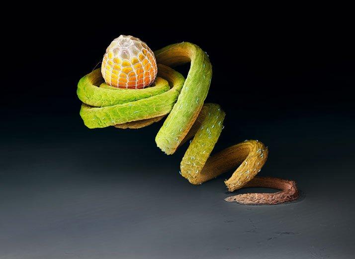Huevo de mariposa dryas julia