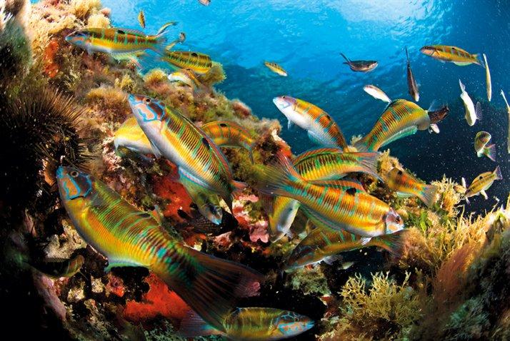 Geografia islas baleares - Fotos de peces del mediterraneo ...