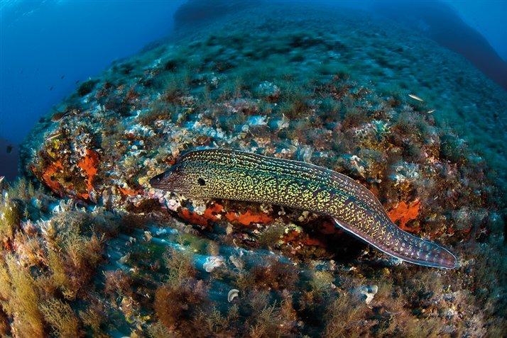 20 im genes submarinas del mediterr neo taringa - Fotos de peces del mediterraneo ...