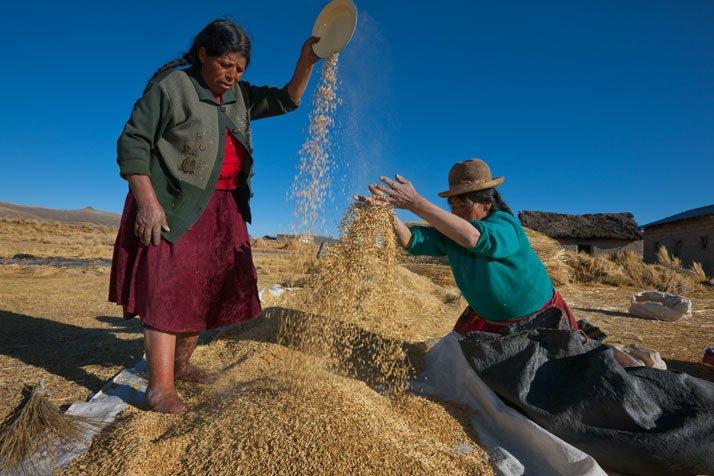 Al igual que sus ancestros, unas mujeres avientan el grano cerca del lago Titicaca. Las granjas agr?colas en los Andes todav?a cultivan la quinoa, el ma?z y el amaranto, junto al trigo, la cebada y la avena, estos ?ltimos cereales introducidos desde Europa.
