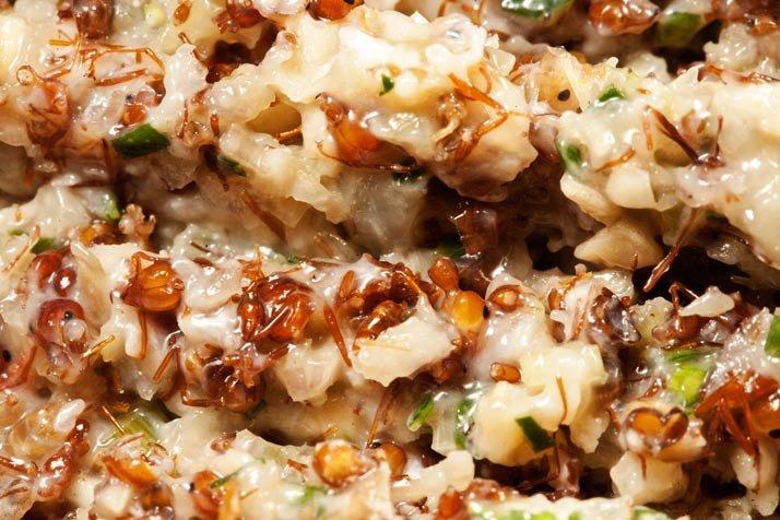 plato de comida camboyano que incluye hormigas
