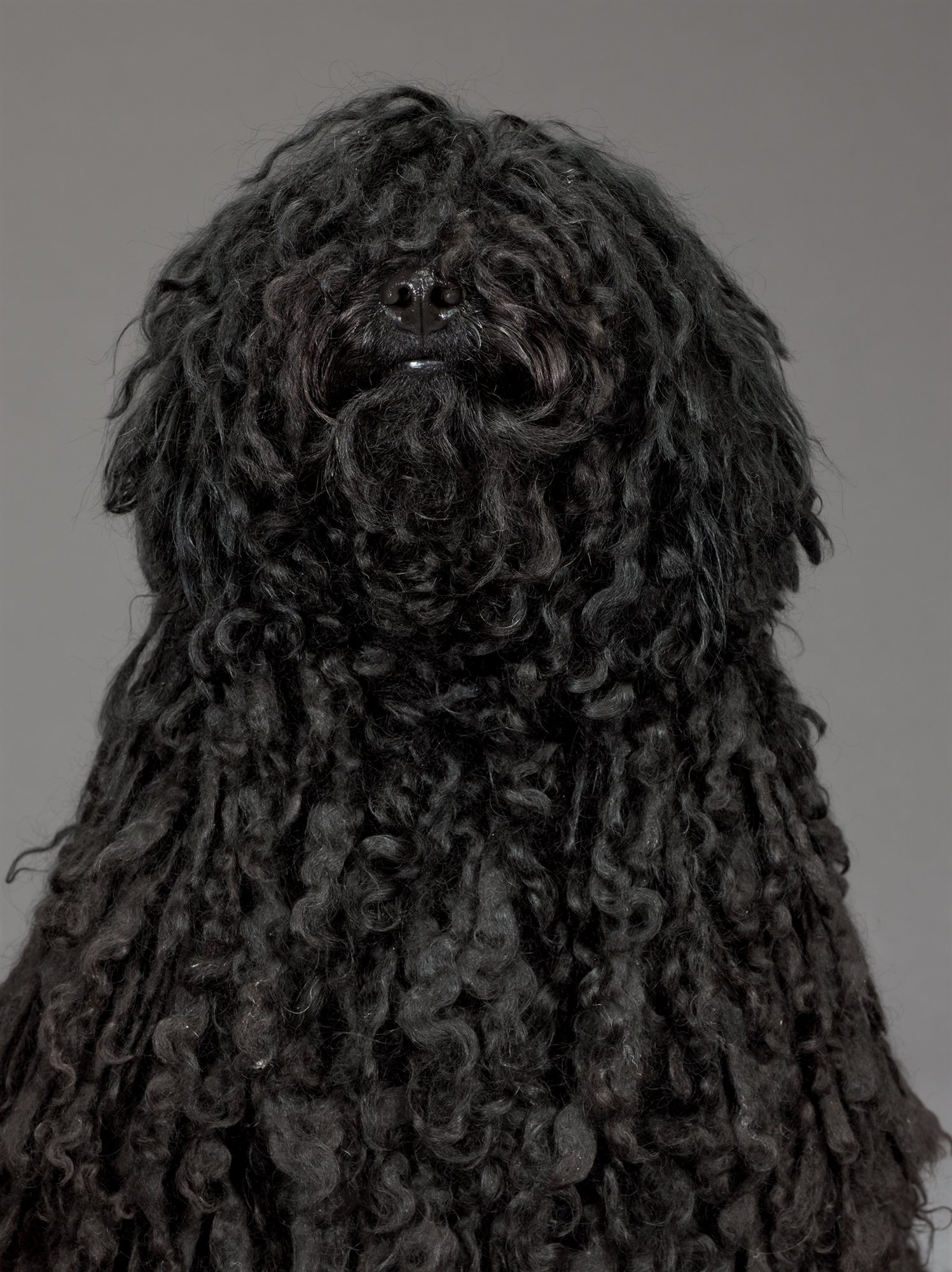 51-black-haired-puli. Charlotte