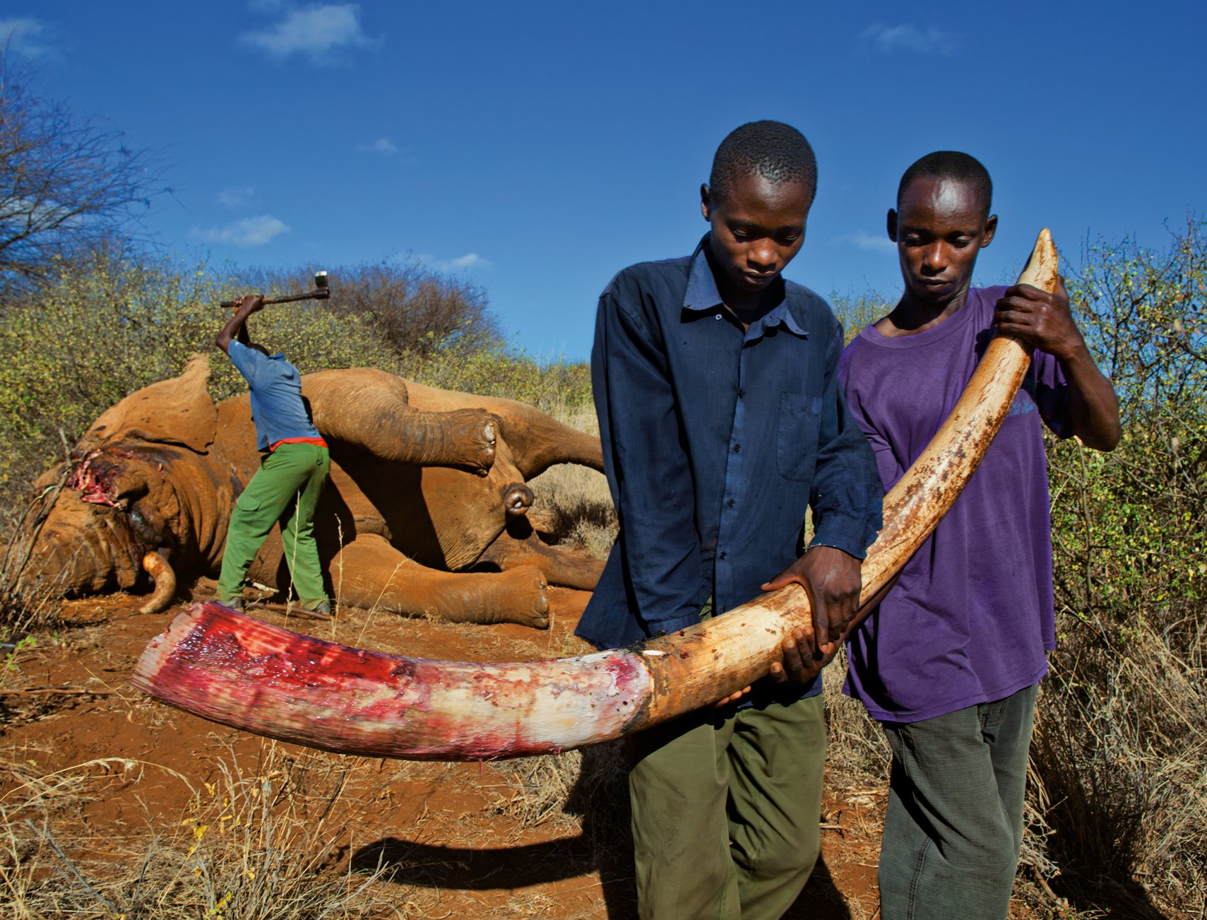 matanza de elefantes