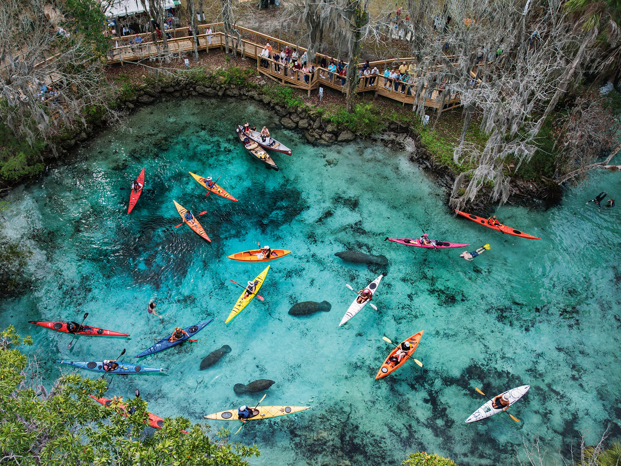 MM8086-120114-11500. Three Sisters Springs, Florida