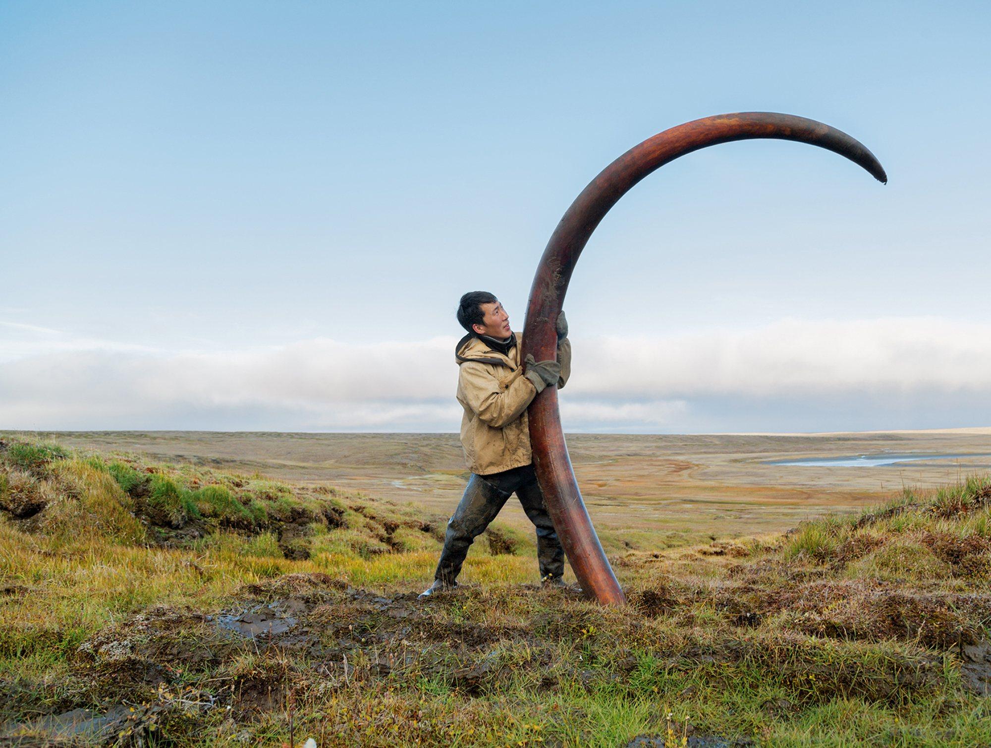 colmillo de mamut