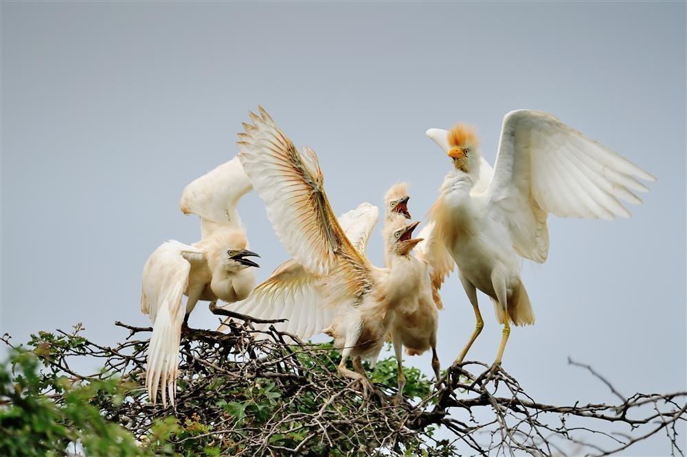 Finalistas: Animales en su hábitat