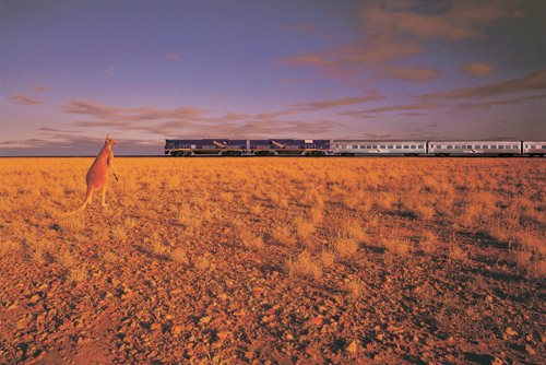 indian pacific roo. Indian Pacific. Australia