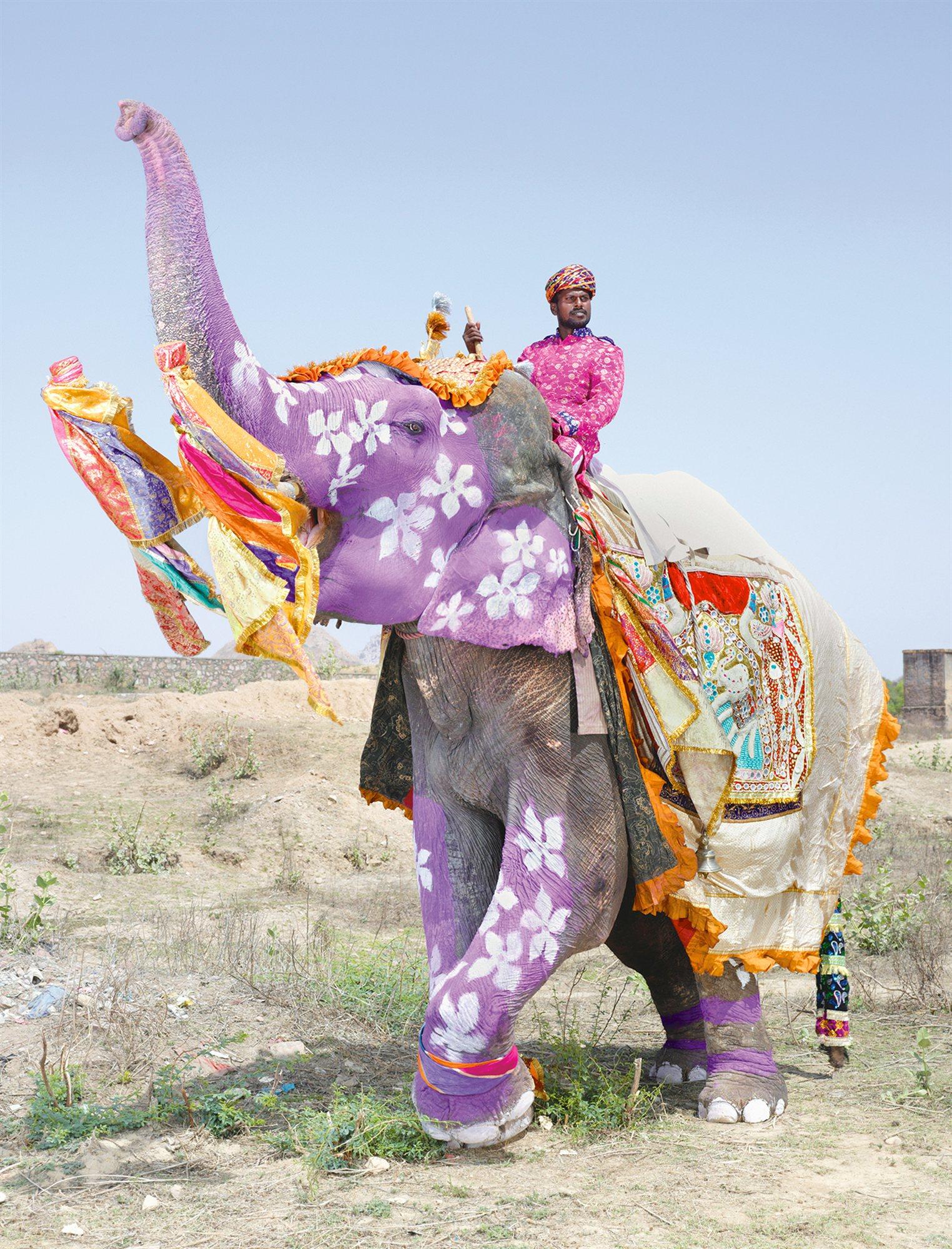 Elefantes de la India: el desfile de los elefantes pintados
