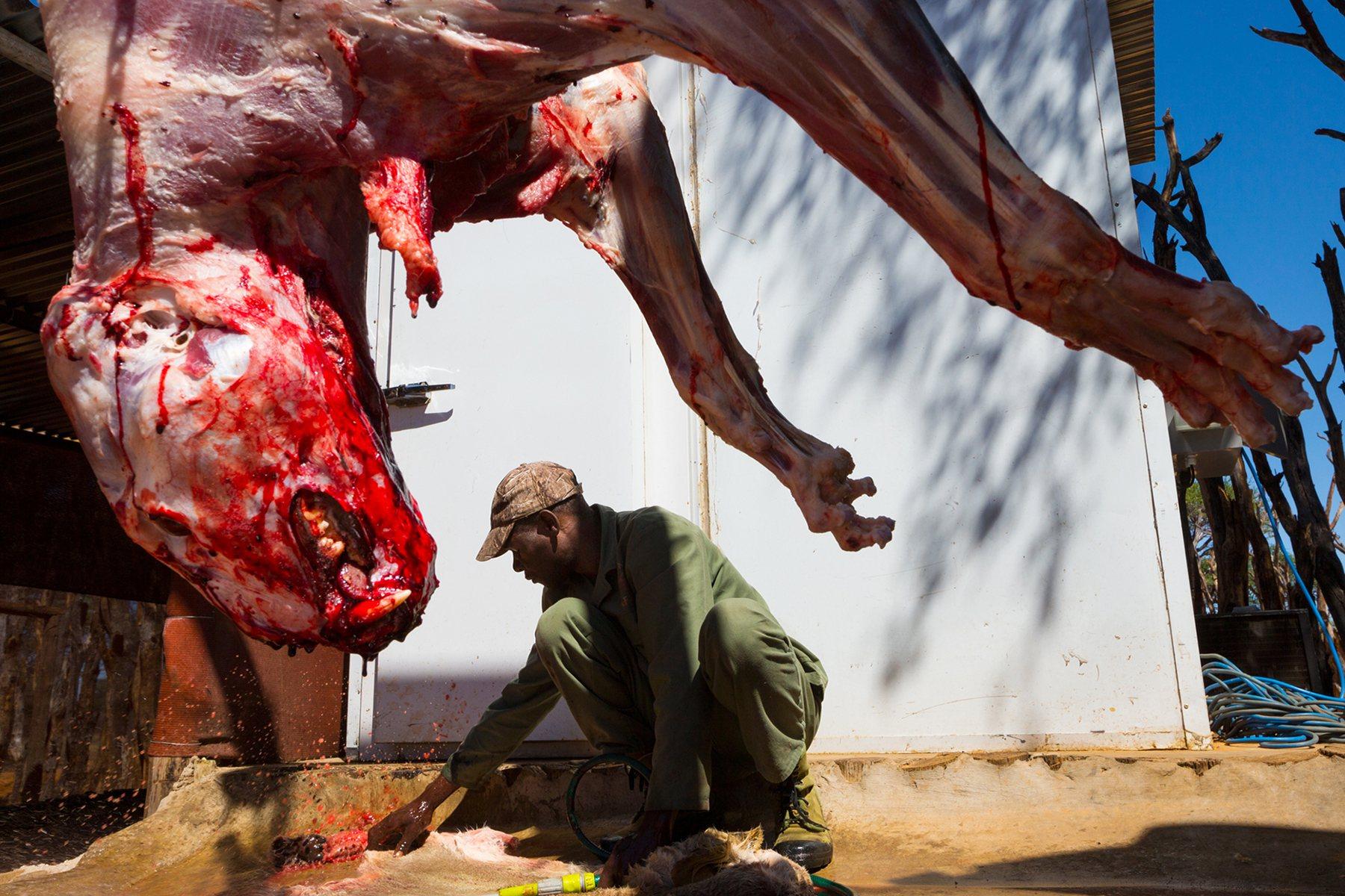 Mm Videos Animales Salvajes Cazando Sus Presas
