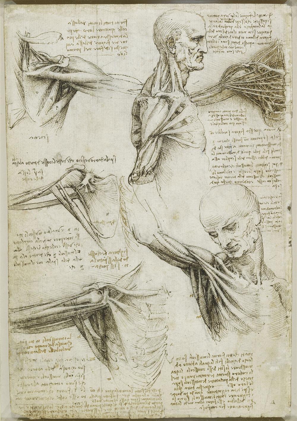 «Leonardo da Vinci: la mecánica del hombre»