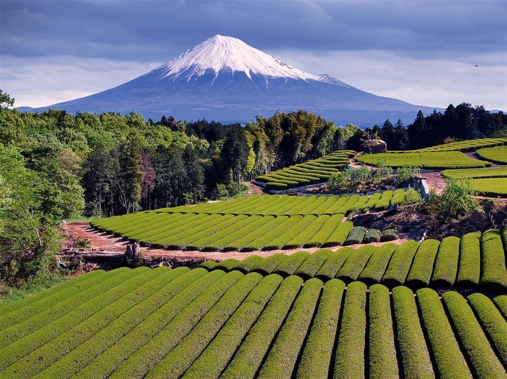 H44-10877619. Monte Fuji