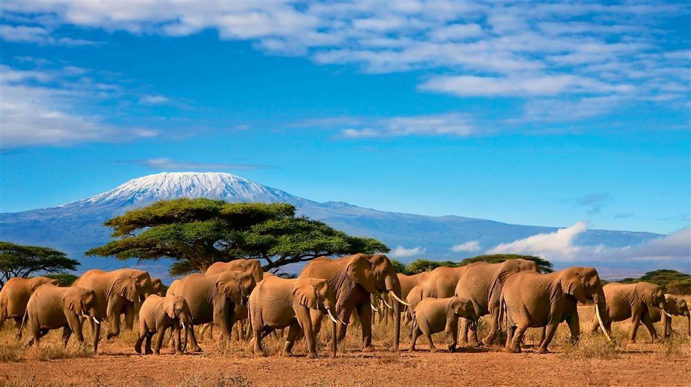 104paul071200002. Monte Kilimanjaro