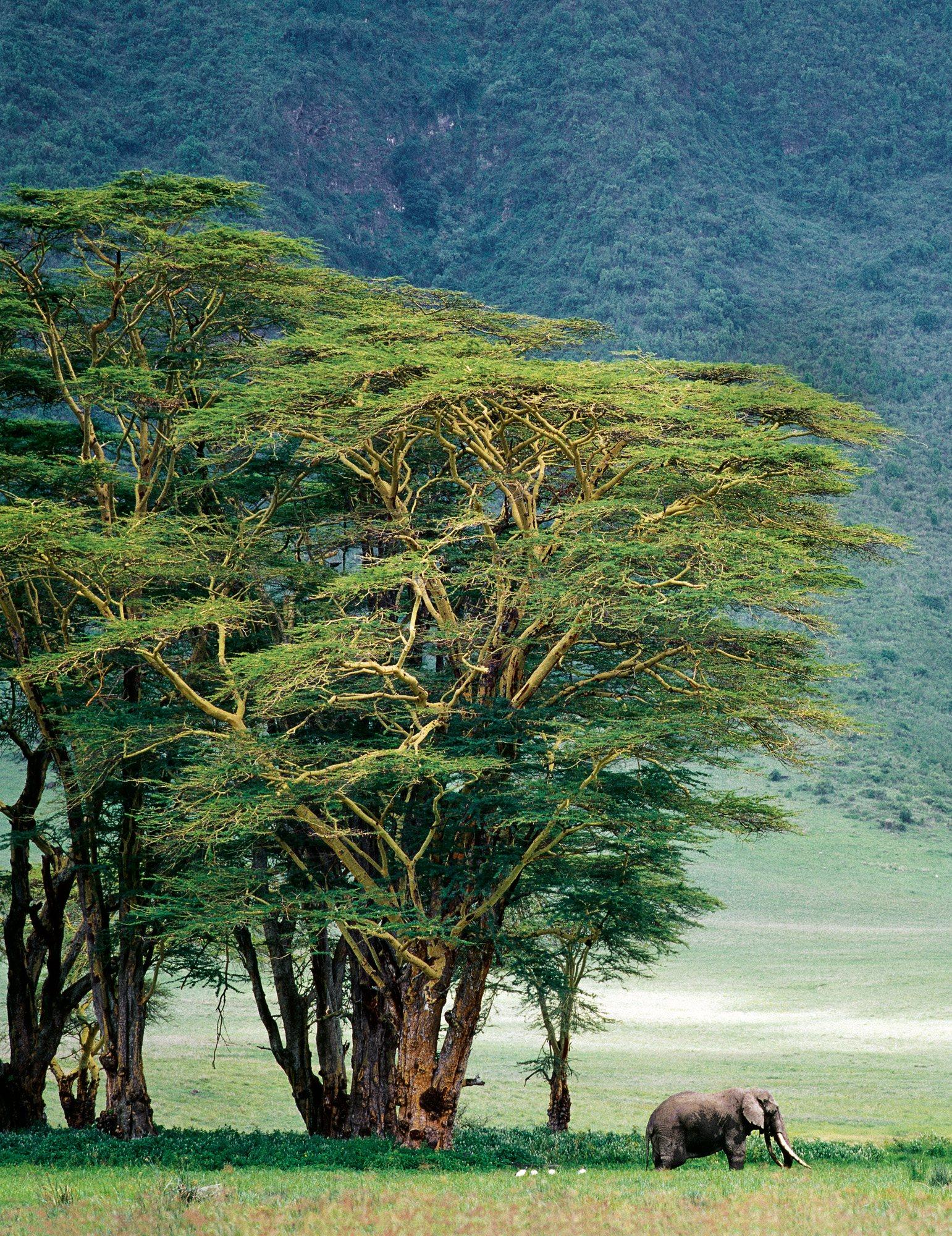 AWL TZ2723. Ngorongoro