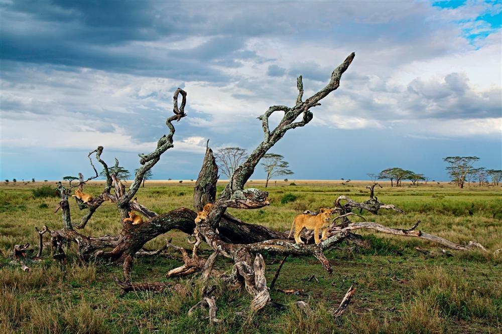 C5463A. Parque Nacional del Serengeti