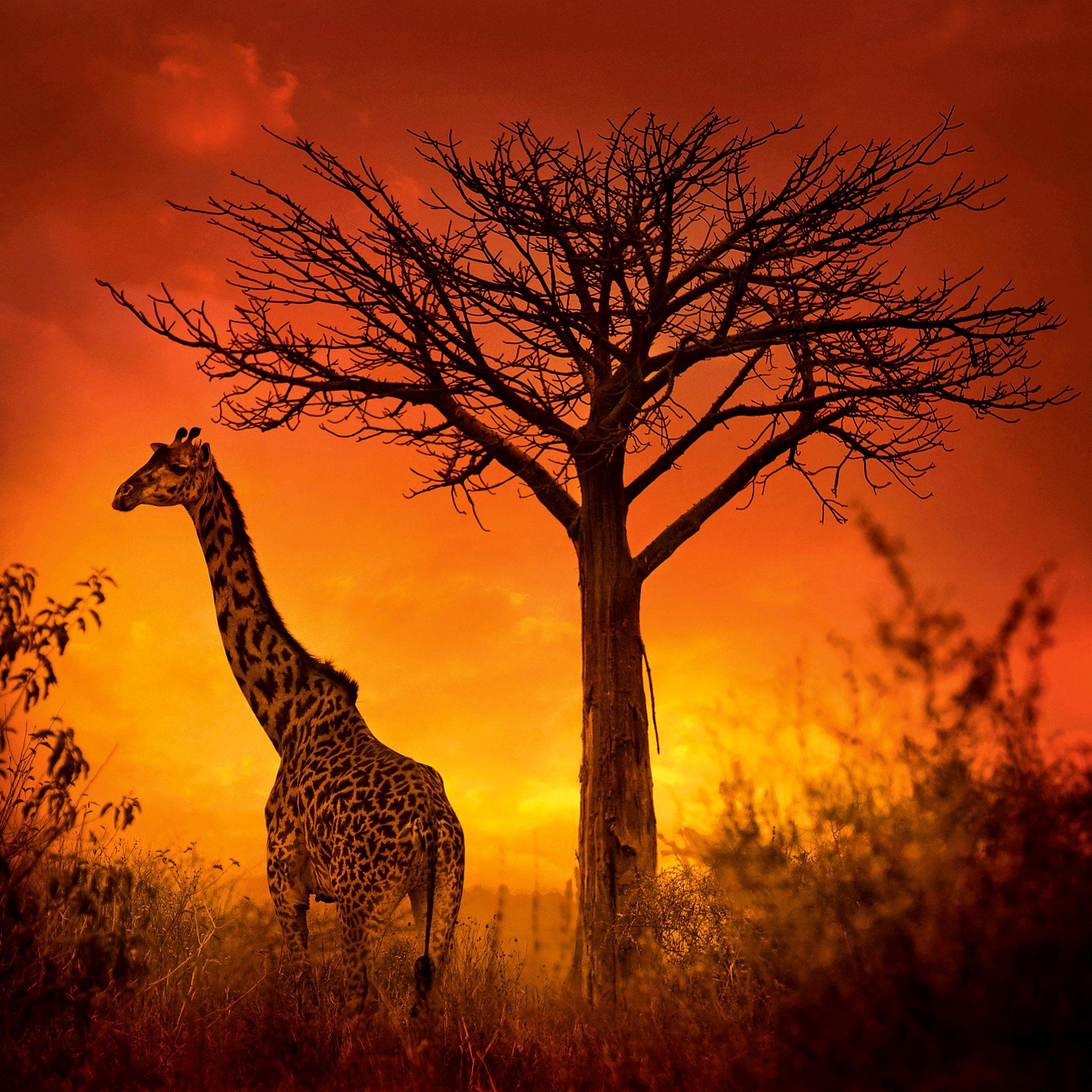 Tanzanie-04L0113-©P.Galibert. Seronera