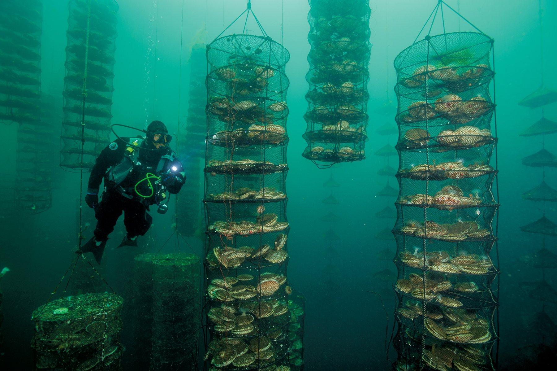Cómo criar un pescado de calidad