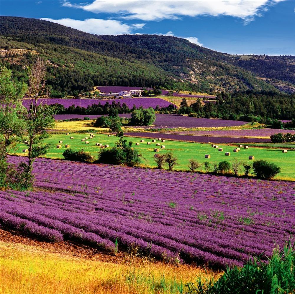 Ruta por la provenza francia entre campos de lavanda - Casas en la provenza ...