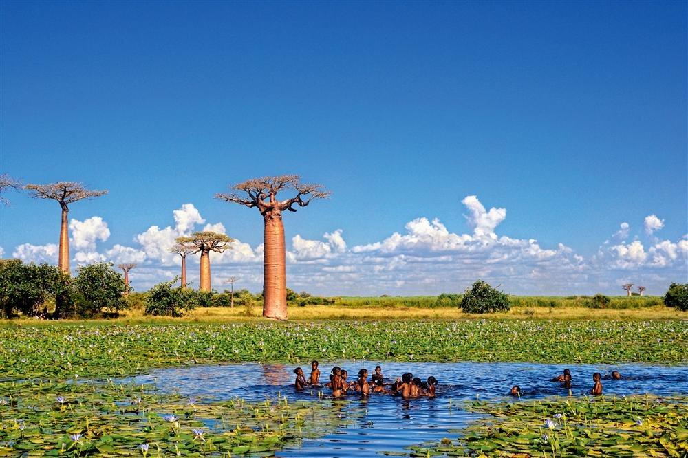 Baobab - Arbre de vie by Ambinintsoa Johary Ramangalahy. Morondava