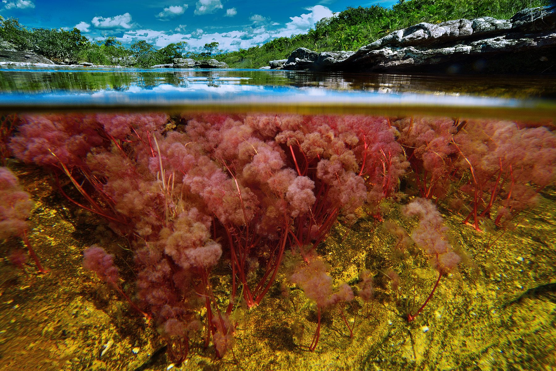 Image result for cano cristales