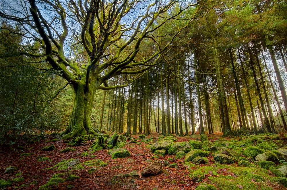 El bosque mágico de Broceliande