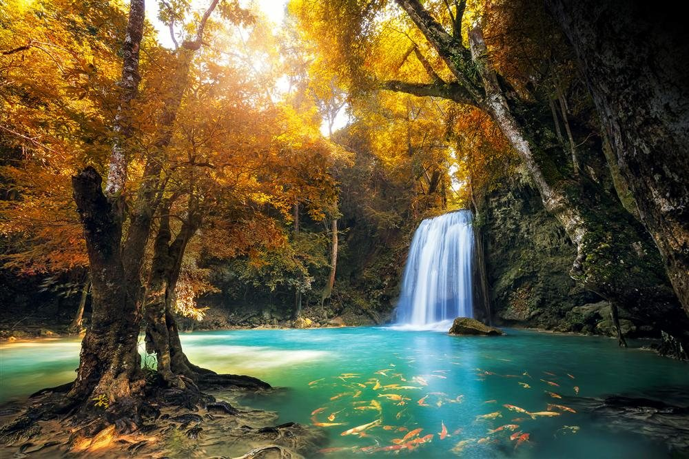 Los bosques m s bellos del mundo for Medio en el que habitan los arboles