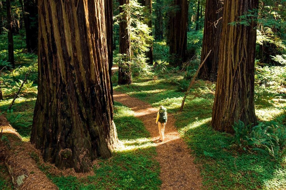 Giant Forest, un hogar para gigantes en California