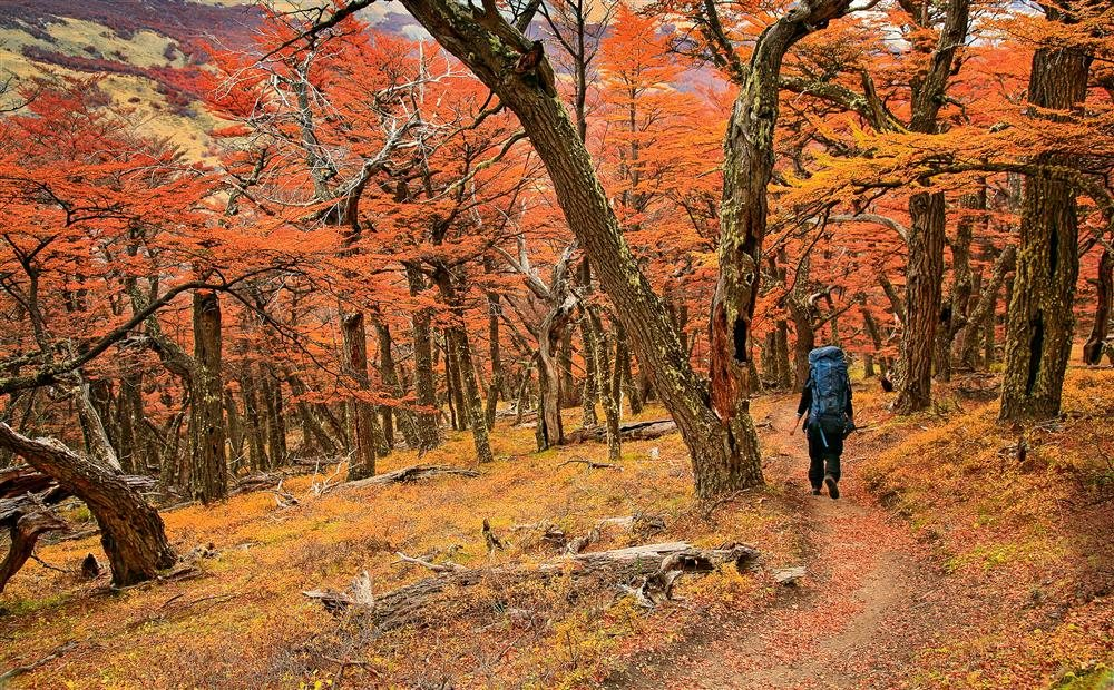 Los bosques de otoño patagónicos