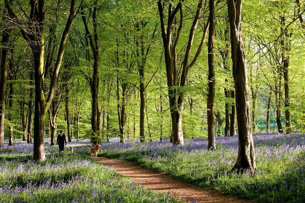 Savernake Forest, la campiña inglesa