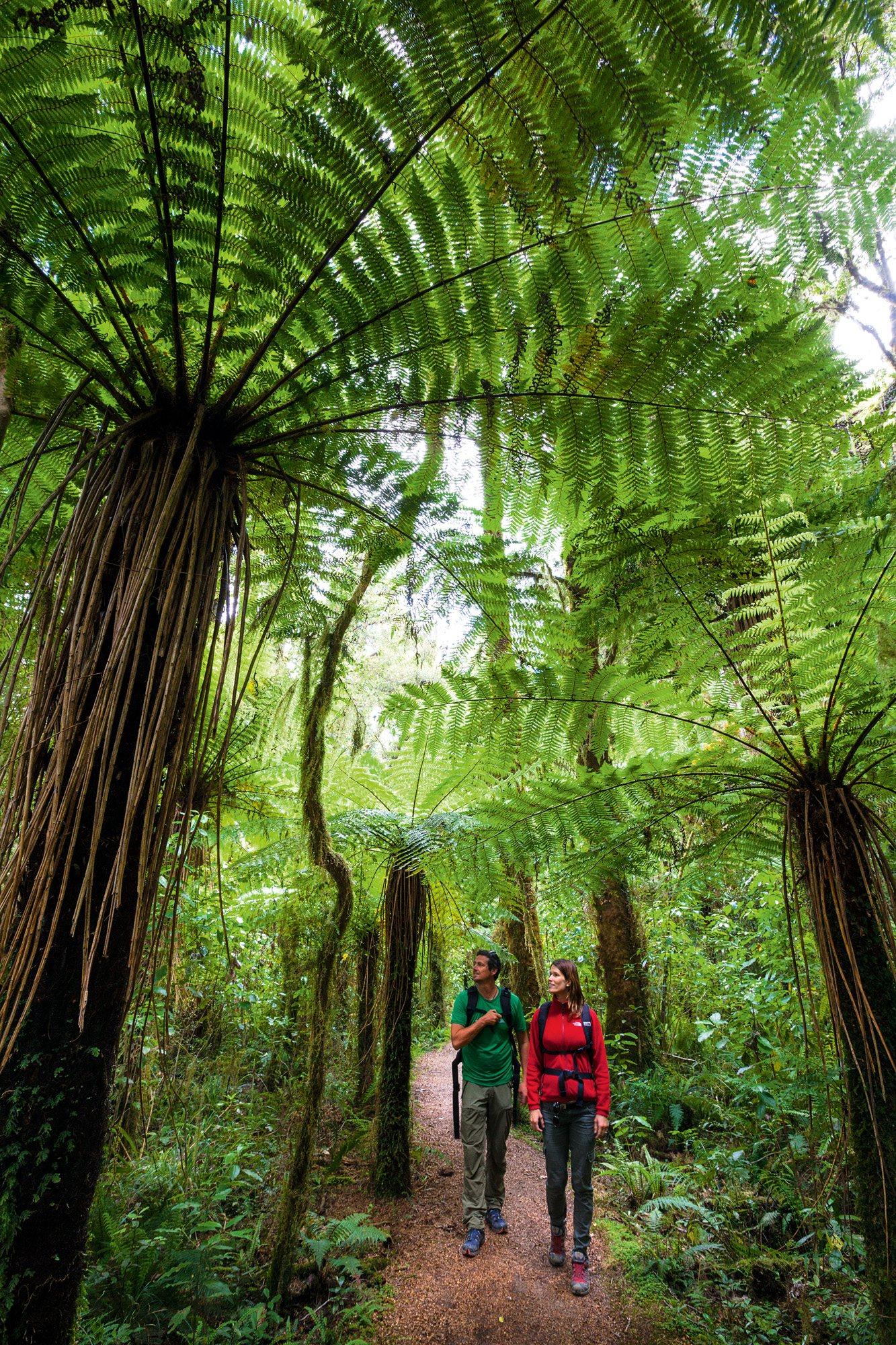 Un bosque de jade en Nueva Zelanda