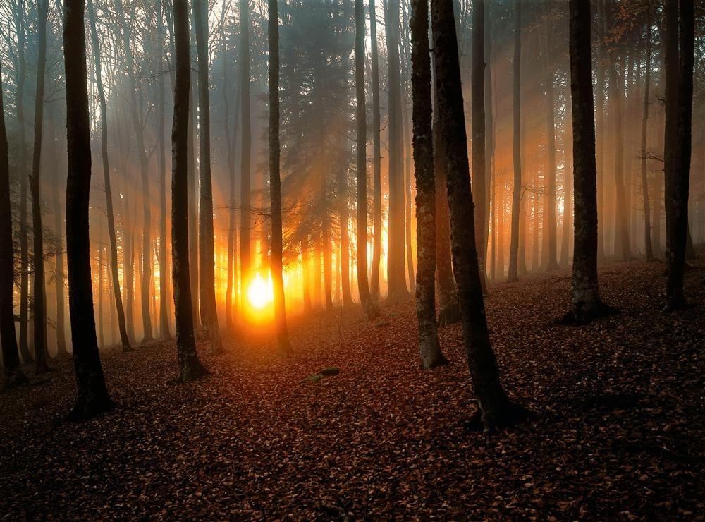 Ruta por la Selva Negra alemana