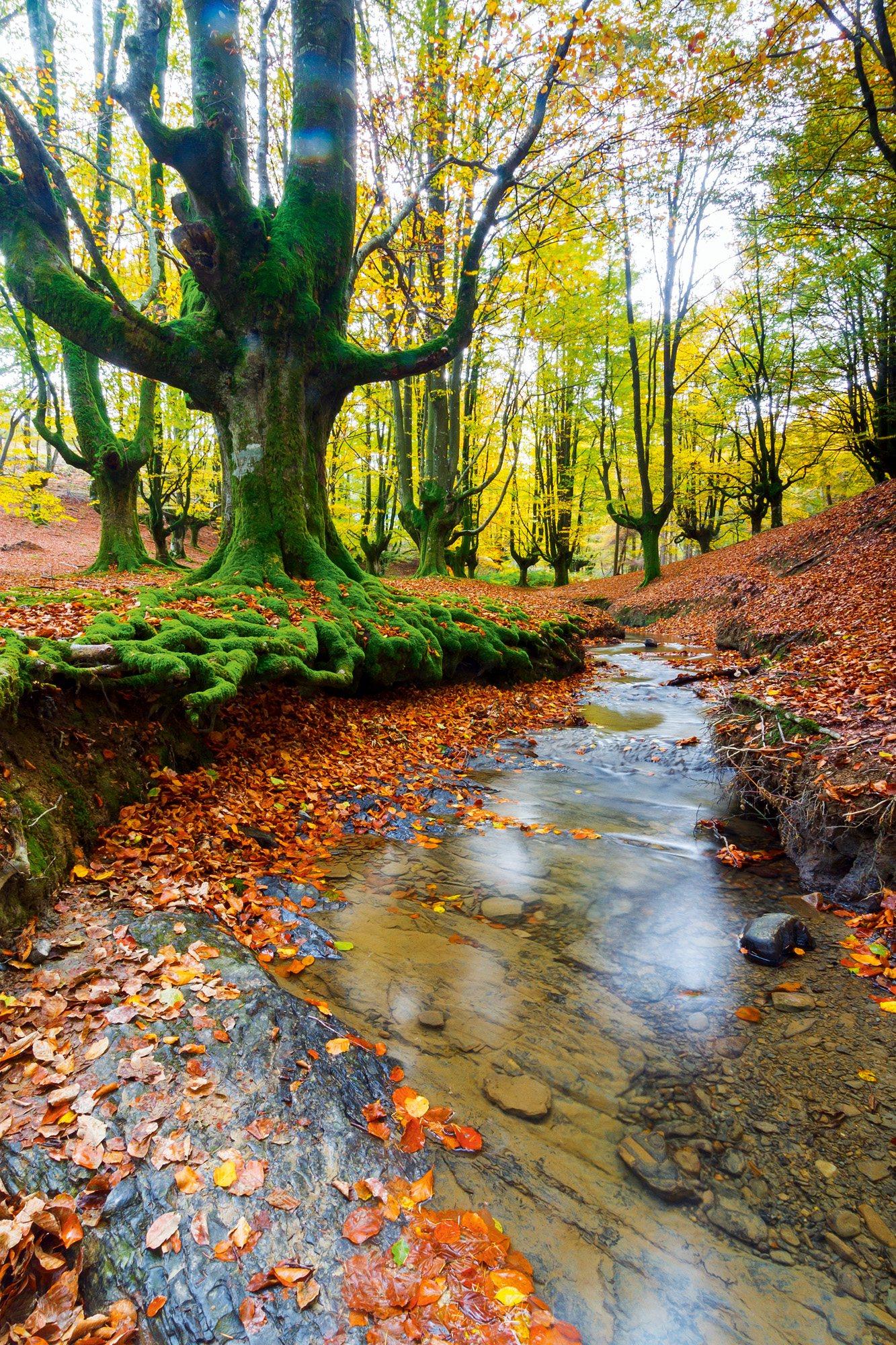 A la sombra de las hayas de Gorbeia, País Vasco