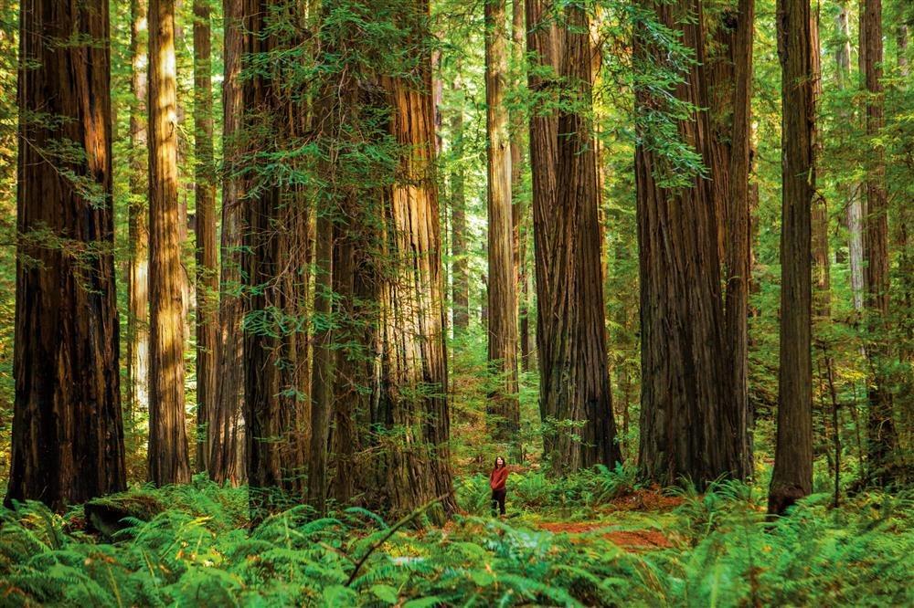 Los parques naturales más bellos del mundo
