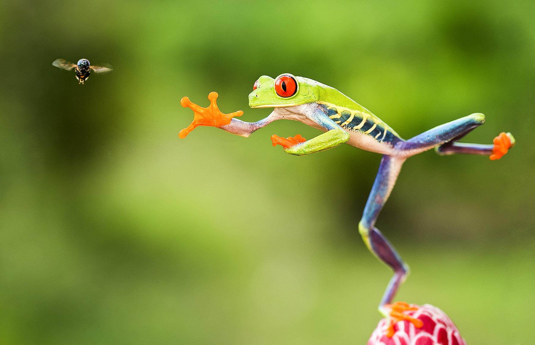58 fotos de anfibios