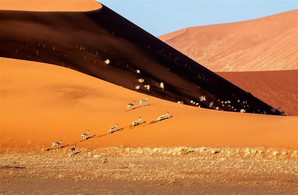 Viaje a través del desierto de Namib hasta el P. N. Ethosa