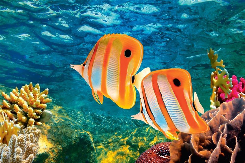10397932 l. Vida en el arrecife