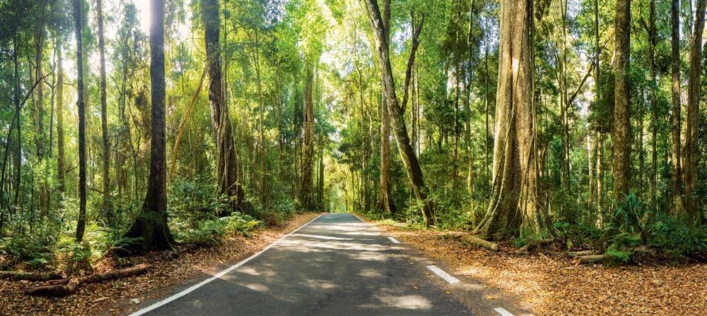 IMG 5559-5565. La selva interior