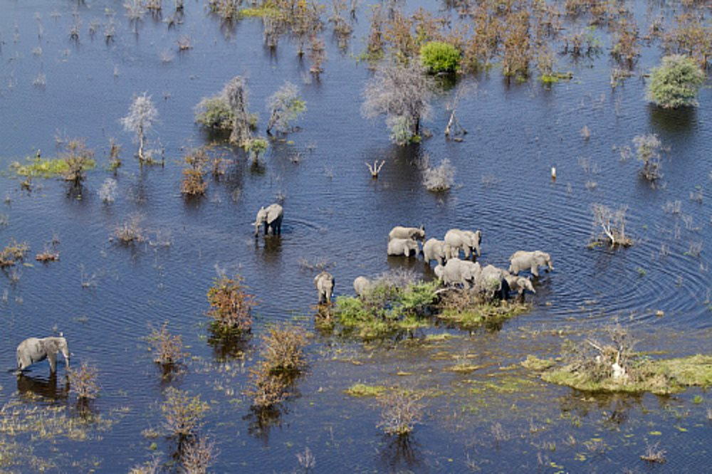 Delta del Okavango. Bostwana. Delta del Okavango. Botsuana