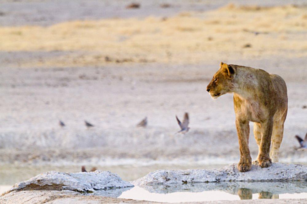 Etosha. Namibia