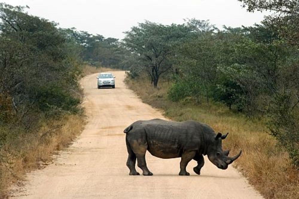 Kruger. Sudáfrica