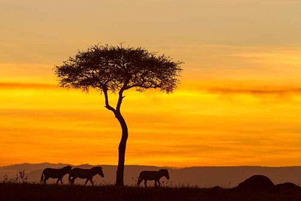 Masai Mara. Kenia
