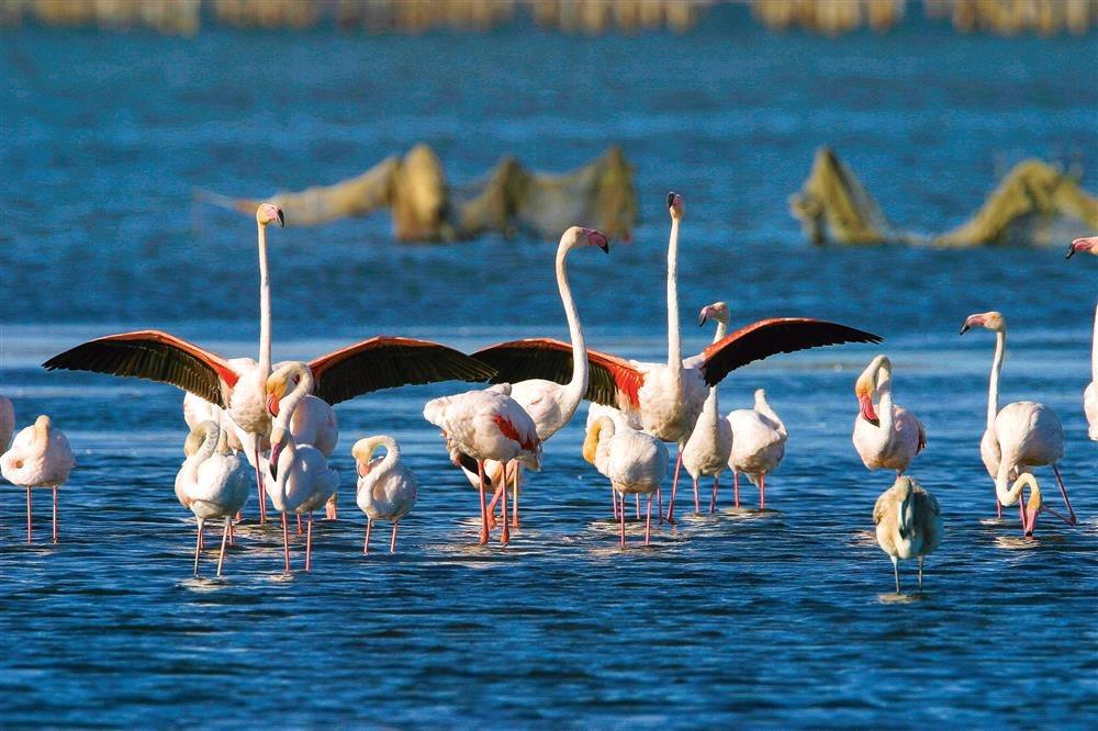 FLAMENCS 260904. Fauna del delta