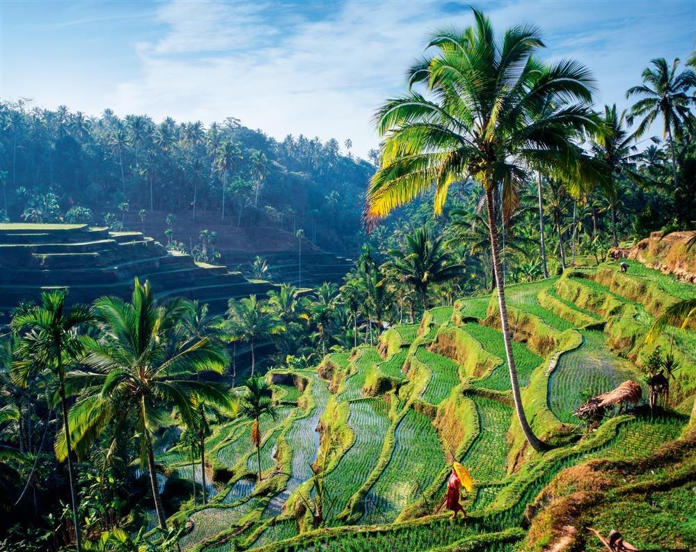 Arrozales Bali. Un paraíso agrícola