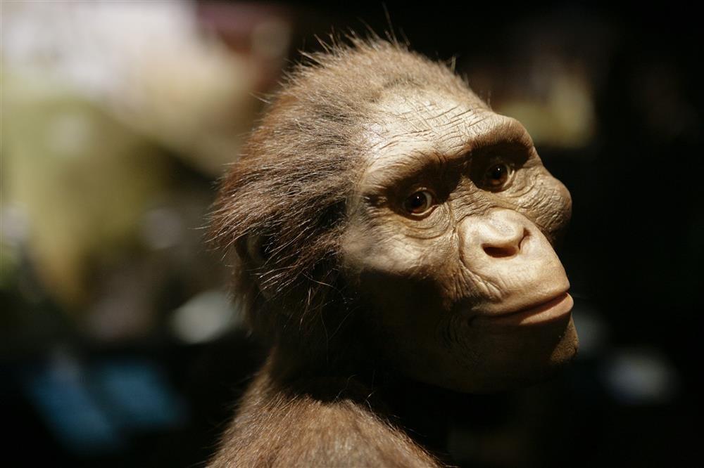 Lucy, la australopithecus más famosa del mundo