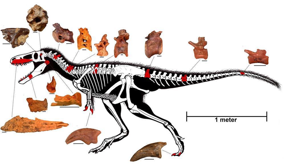 158 Fotos de Dinosaurios - Pagina 3