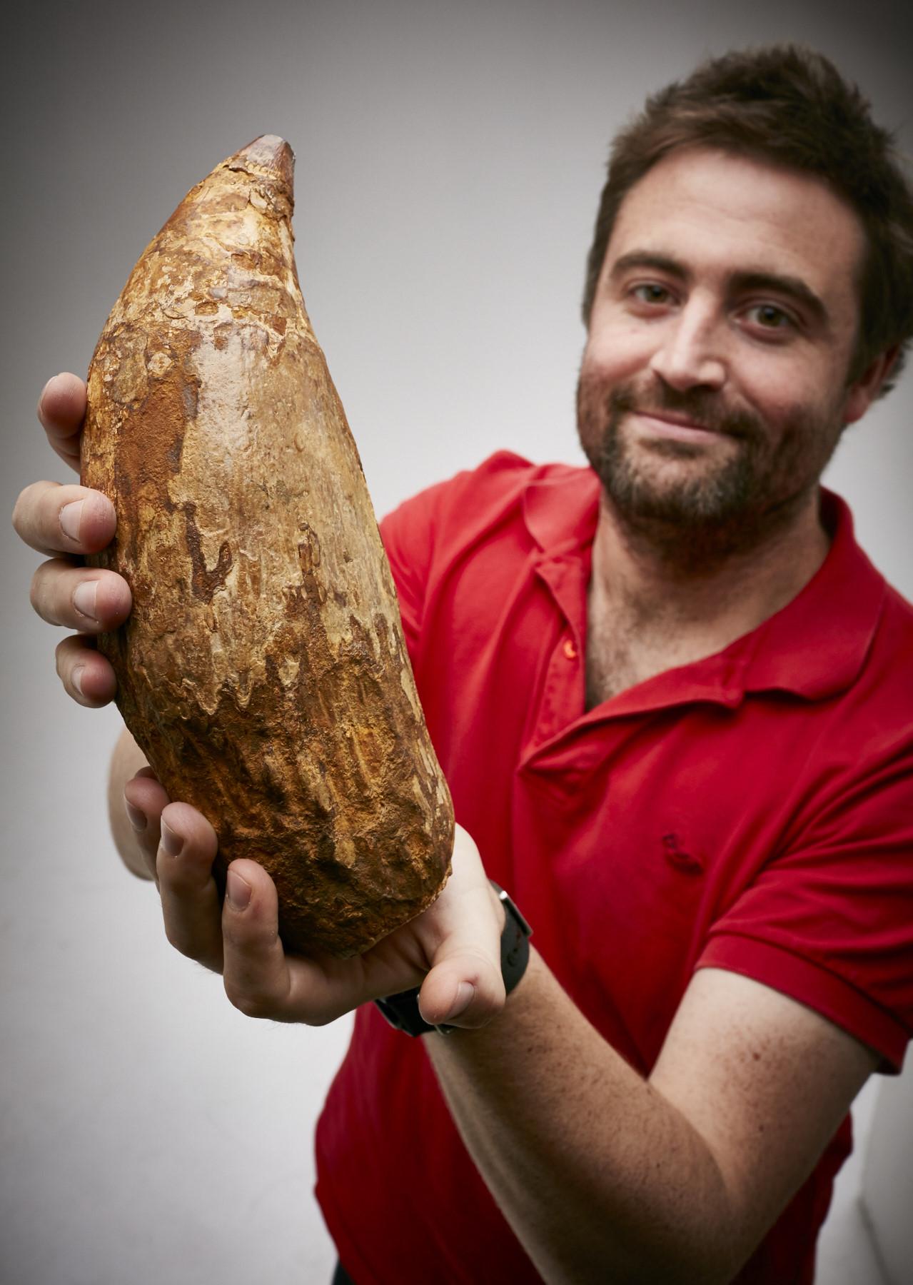 Diente fosilizado