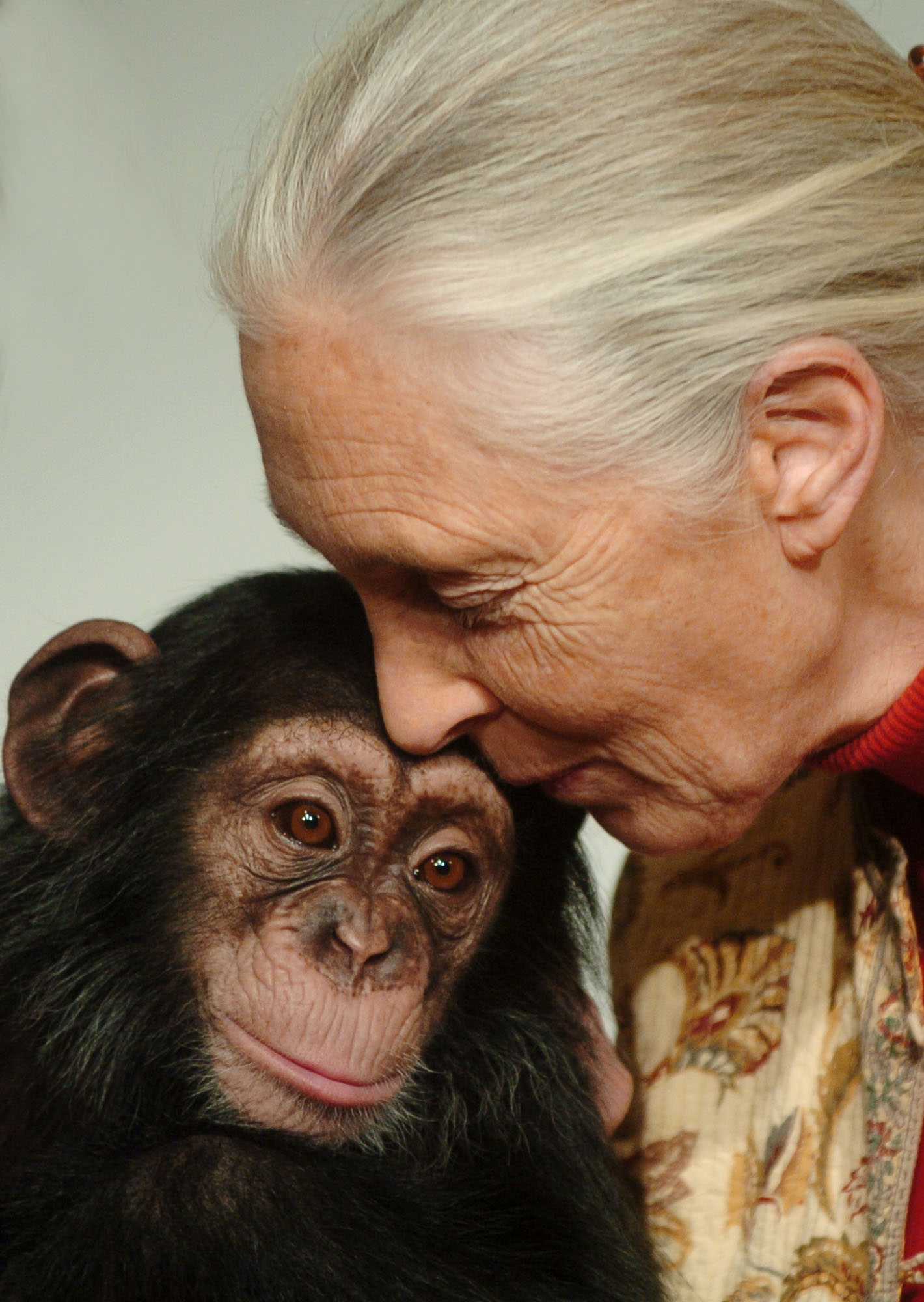 Jane goodall chimpances
