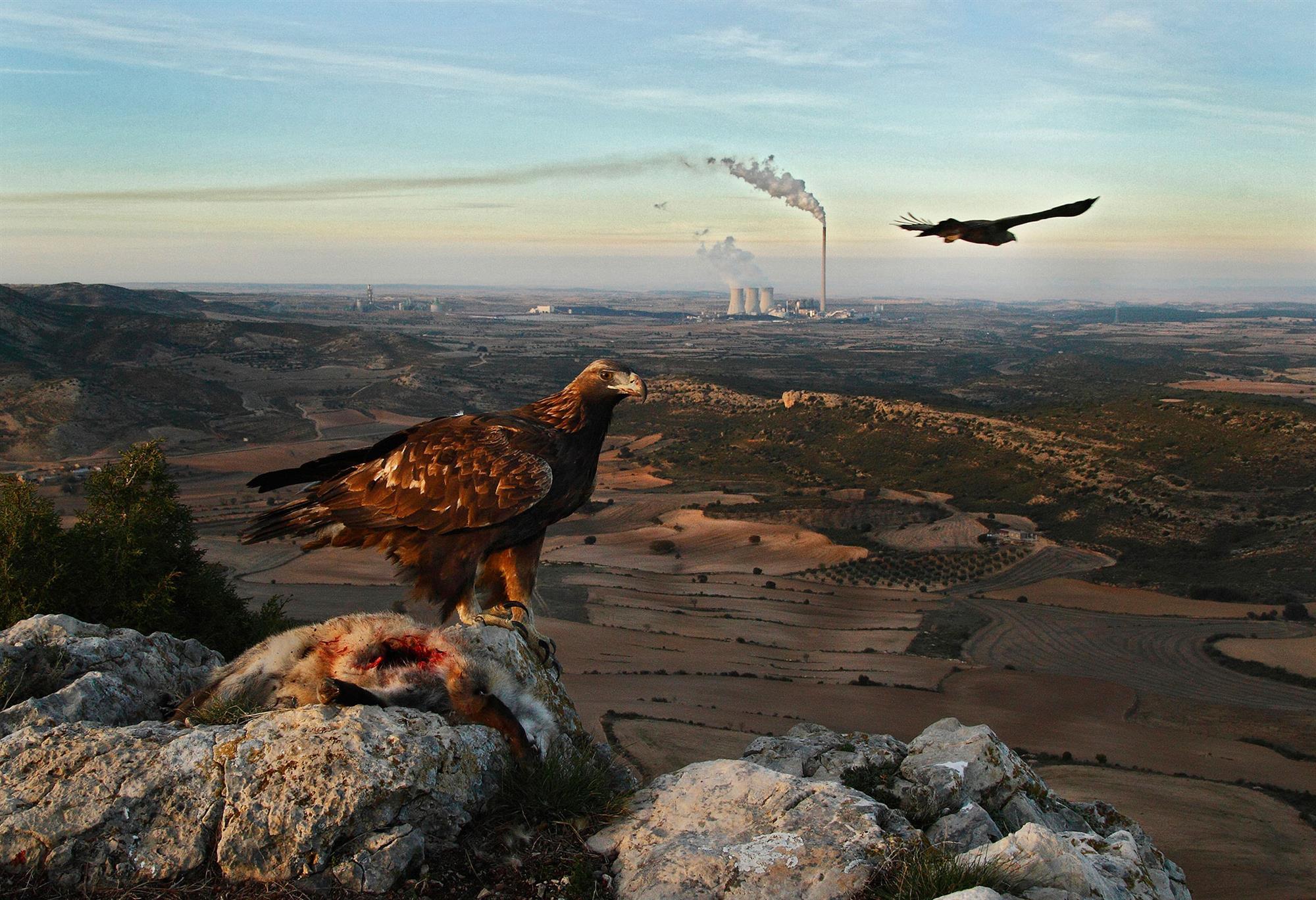 En tierra de Águilas