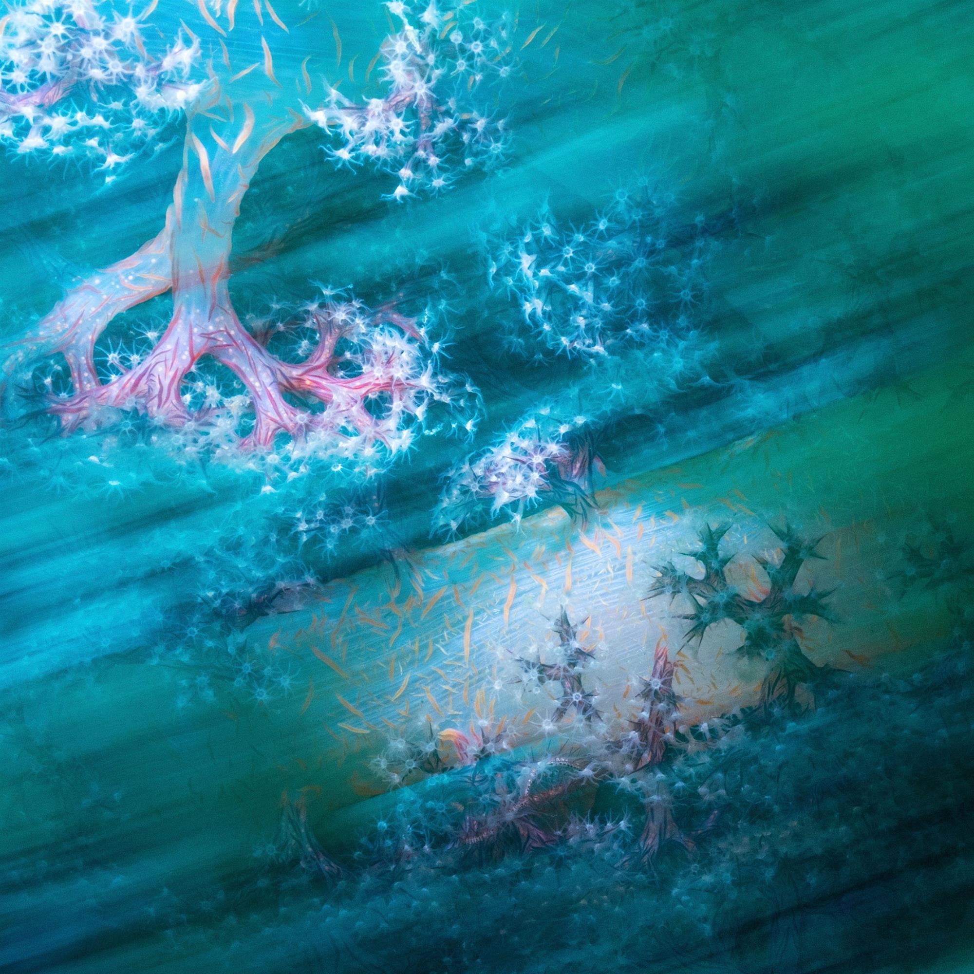 """Coral laces (""""Cordones de coral"""")"""