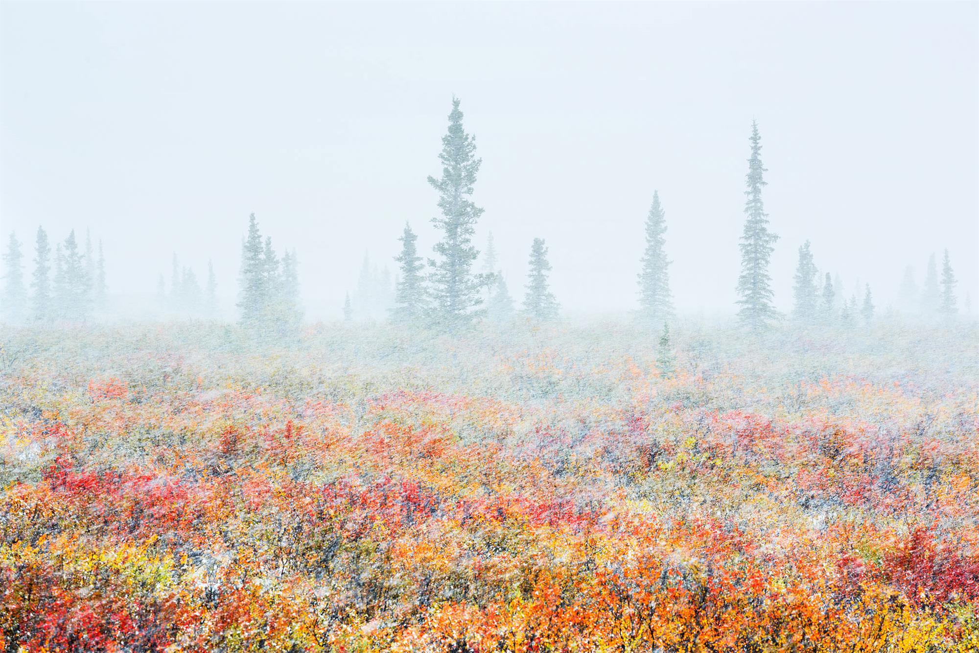 "Tundra Storm  (""Tormenta tundra"")"